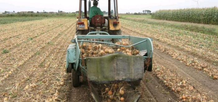Картофелекопалка