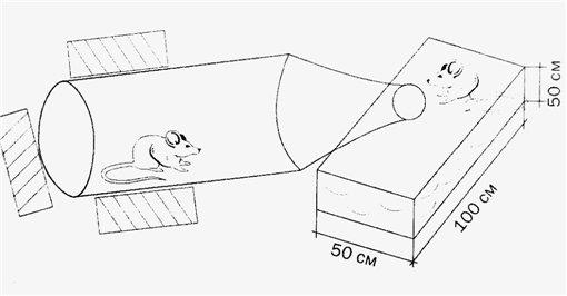 Как сделать мышеловку домашних условиях
