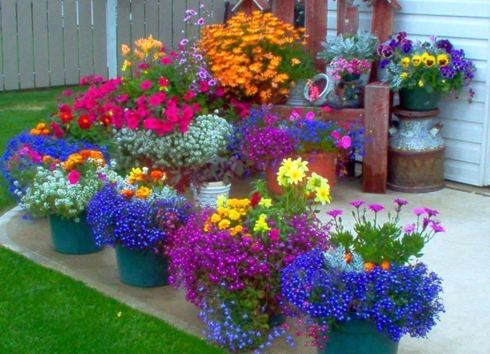 Какими цветами оформить клумбу на даче своими руками