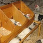 Кормушка для куриц своими руками